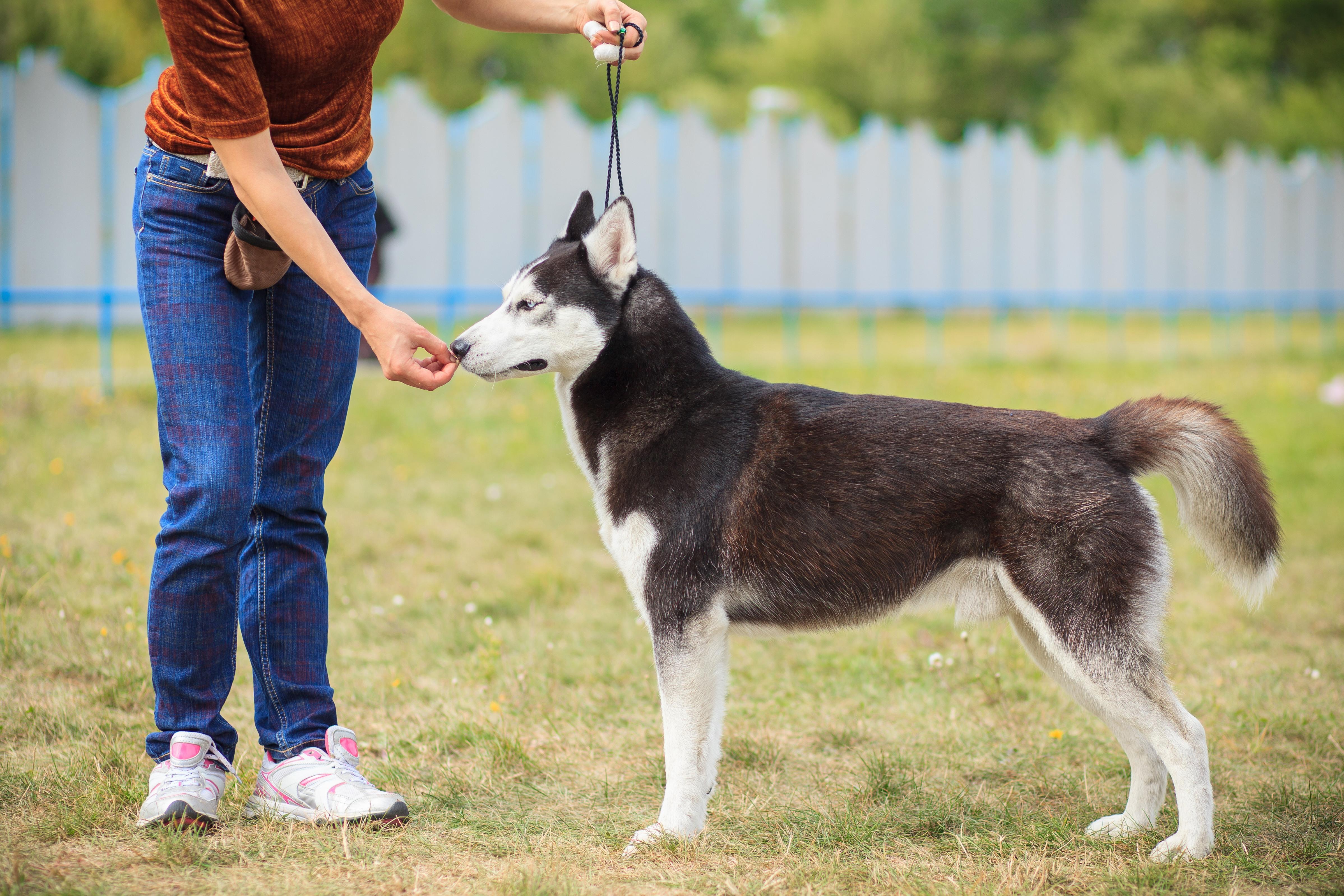 Worst Dog Training Mistakes