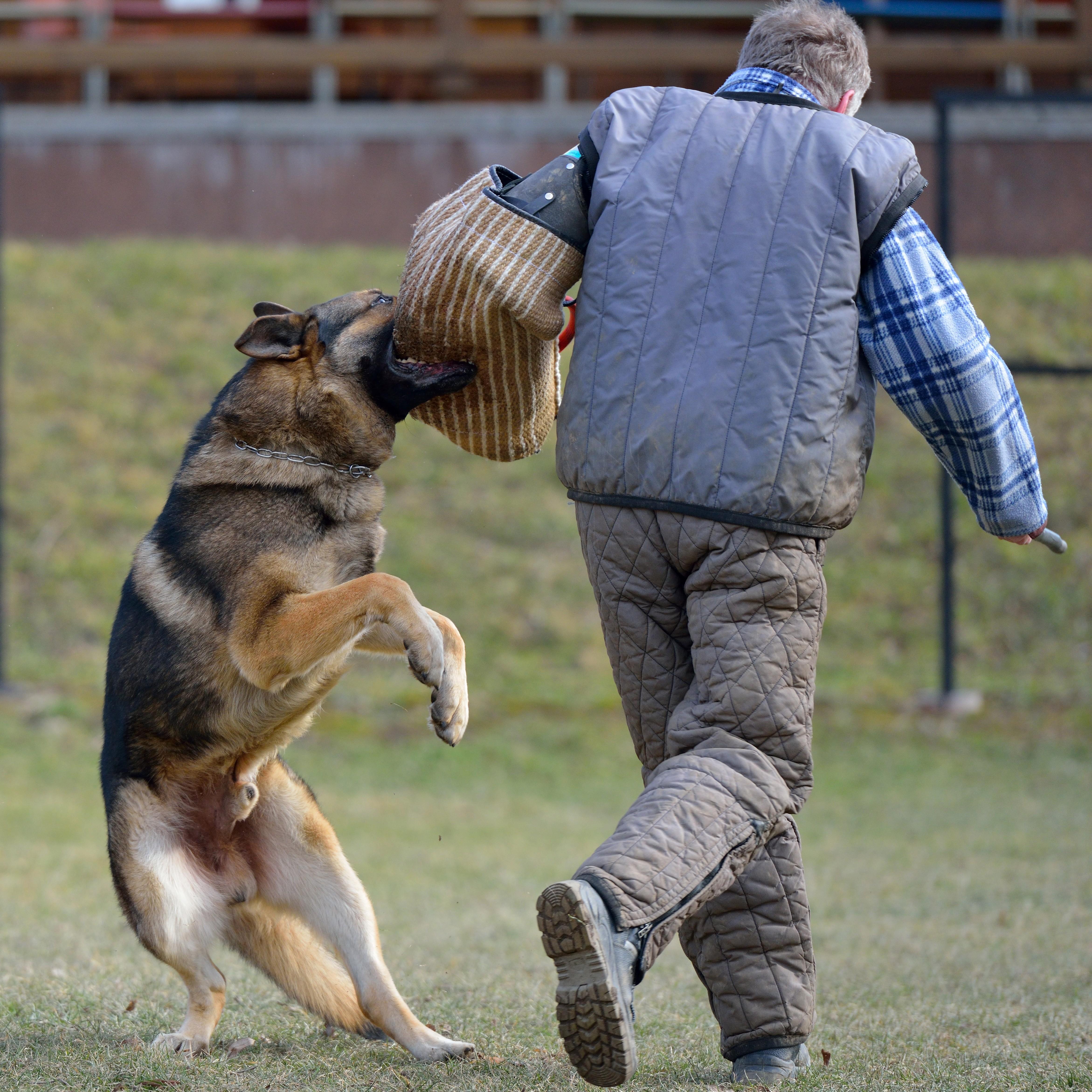 Do Dogs Ever Bite for No Reason?