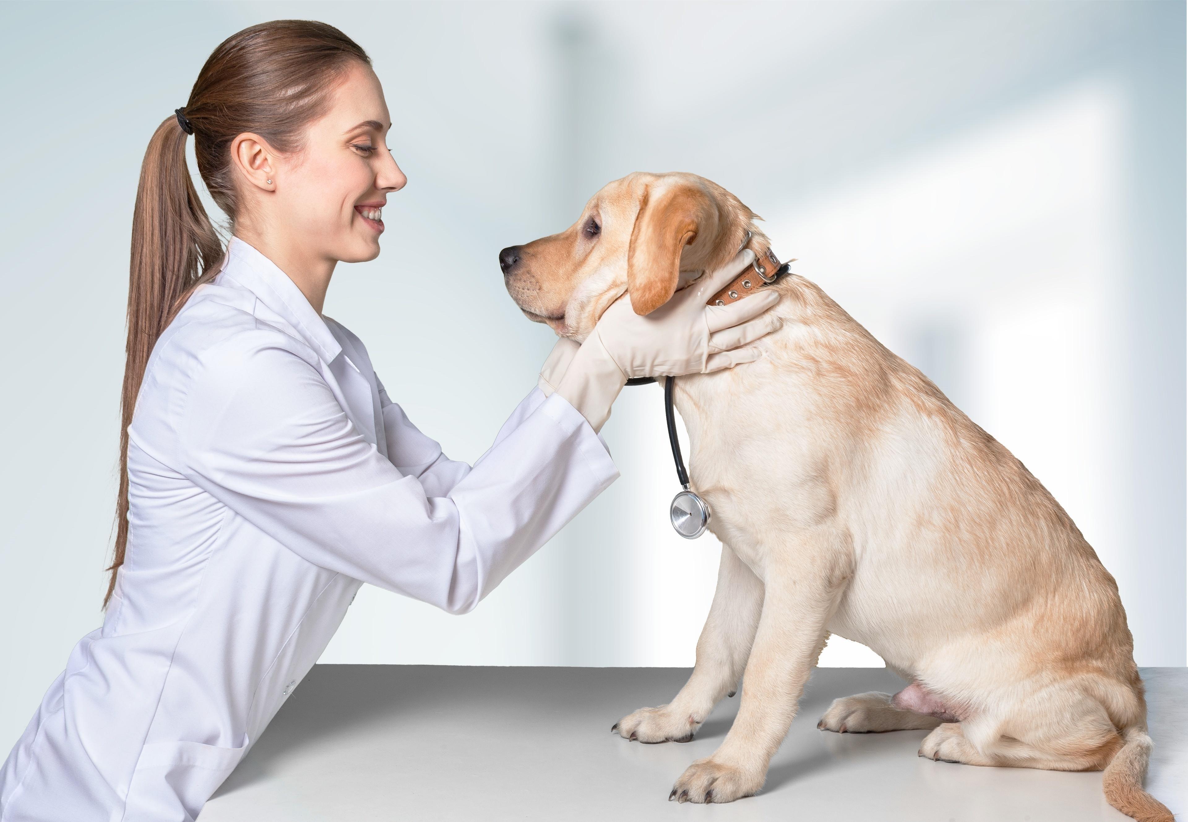 Dog at vet