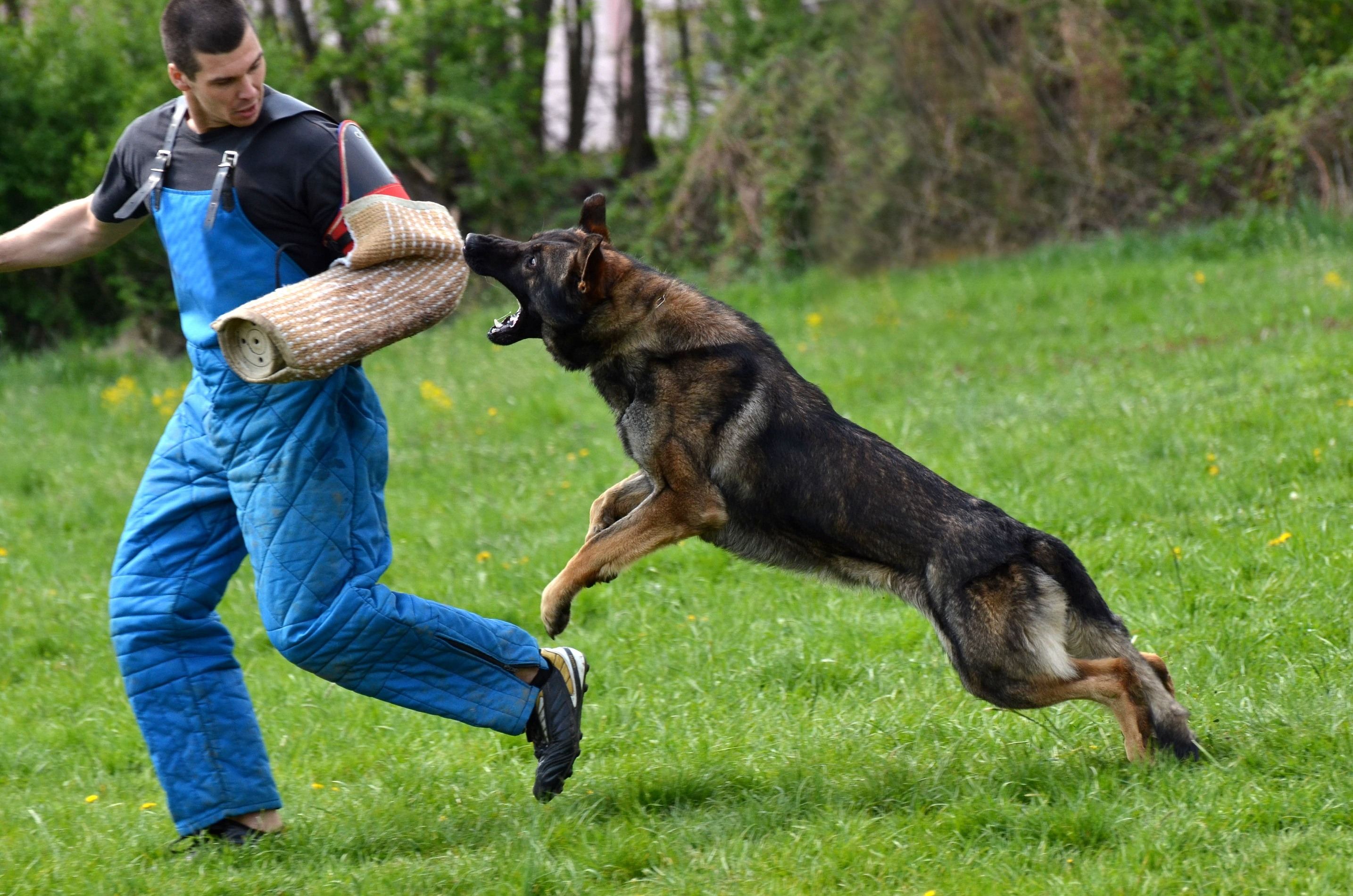 Training Your Dog to Attack