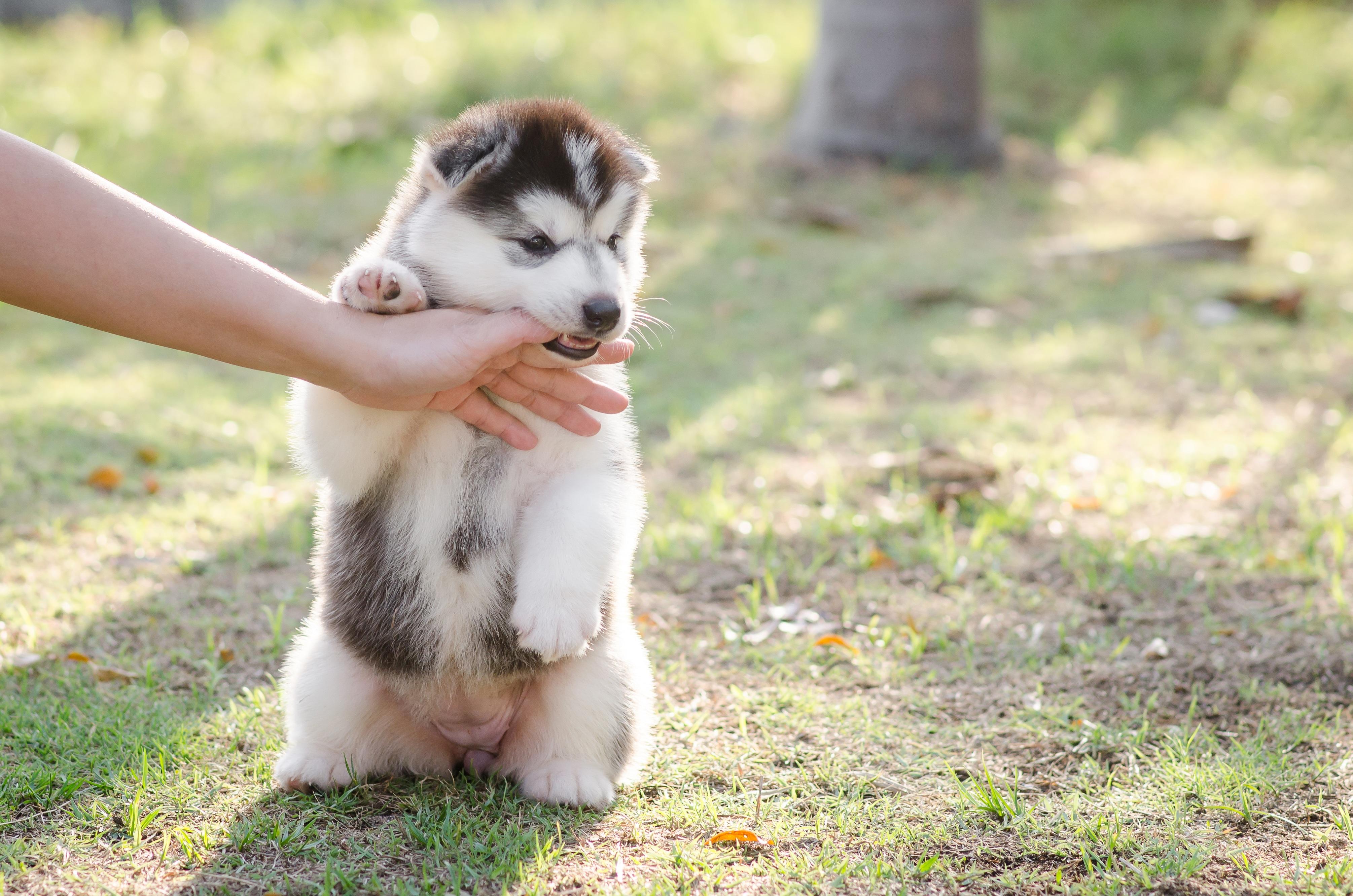 Dog Nipping