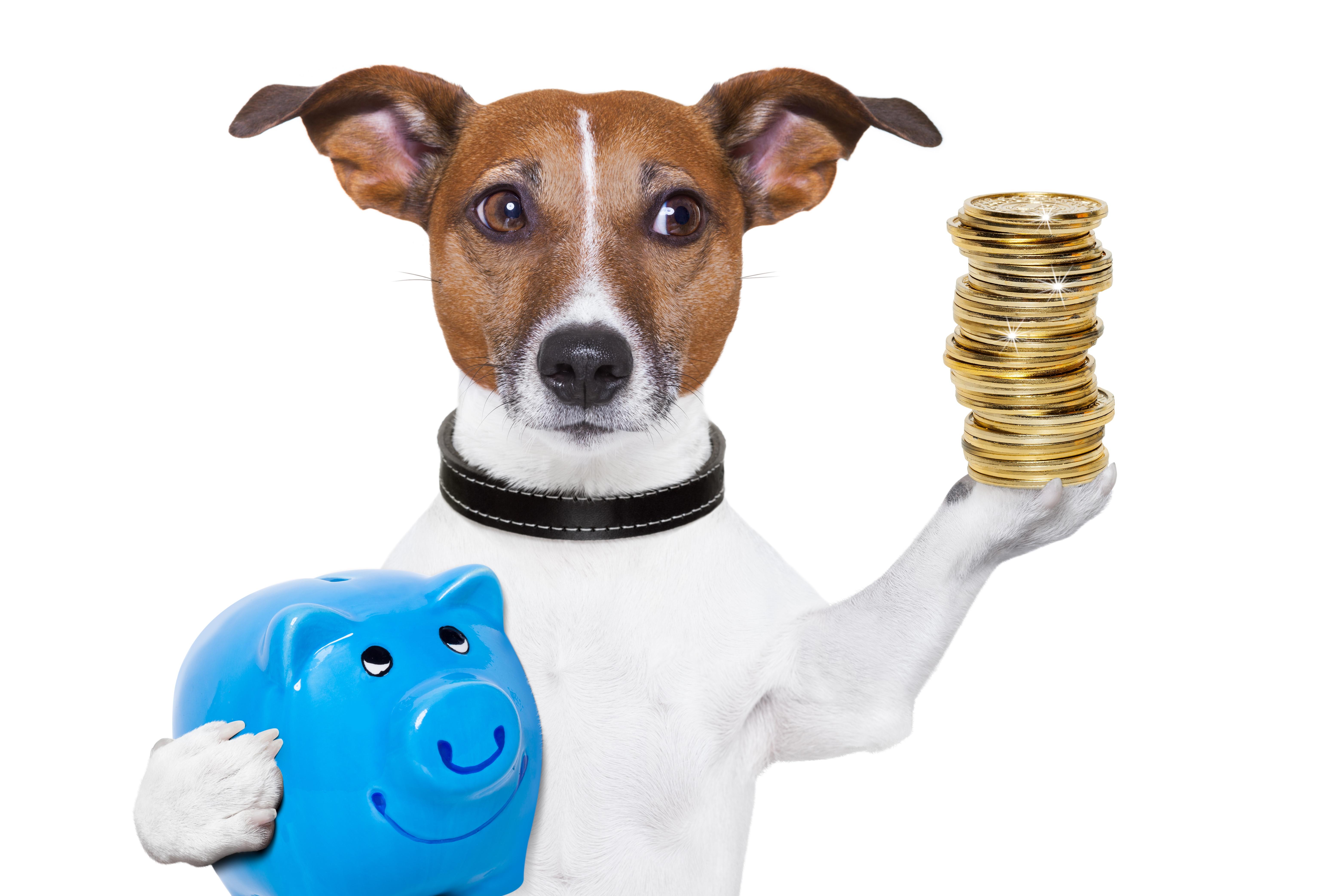 Dog Budget