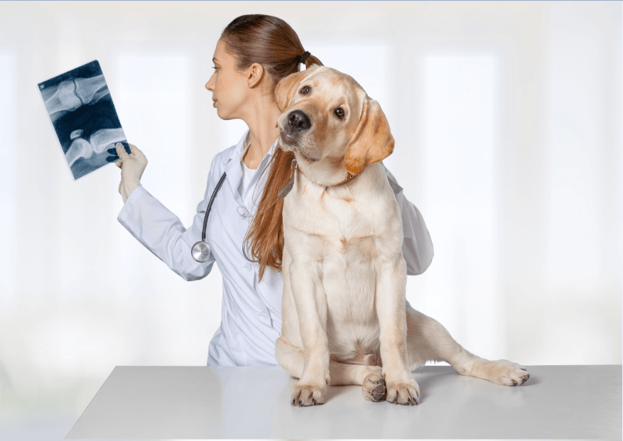 Canine X-Ray