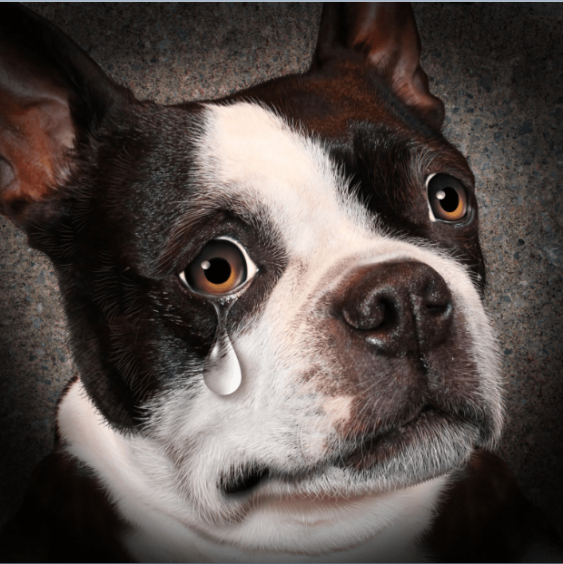 Dogs Cry Tears