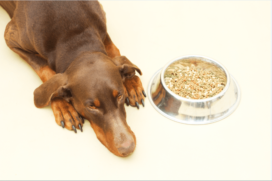 Doberman Dog Foods