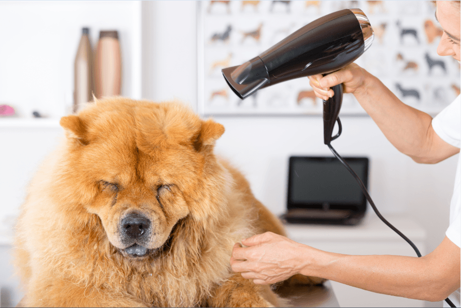 Dog Hair Blowers