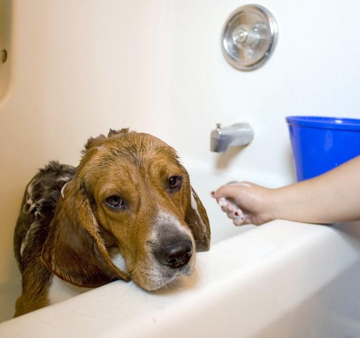 Bath Time With Dog