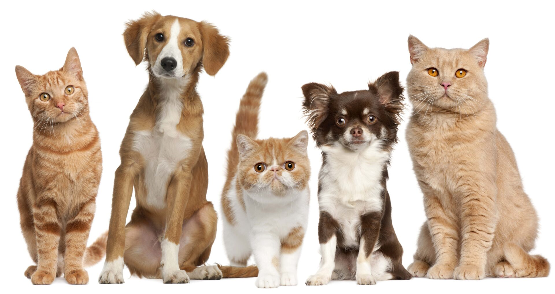 Cats & Dogs Statistics