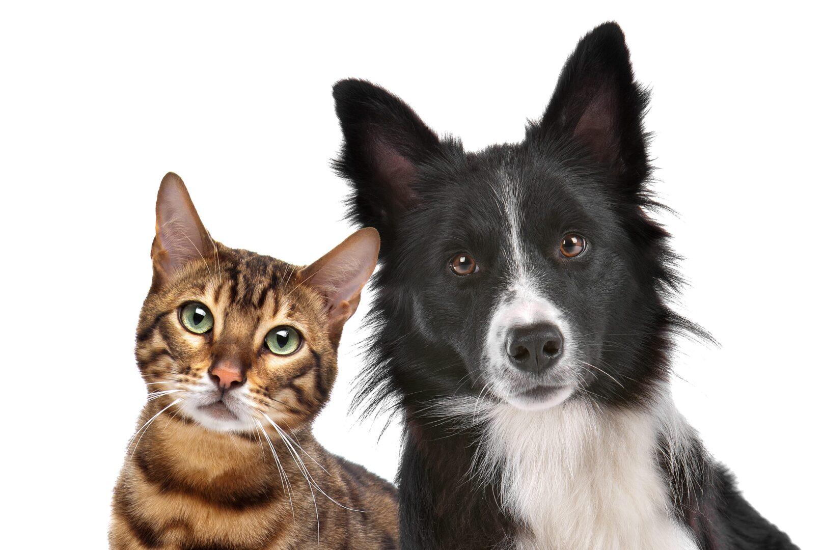 Cats & Dogs Statistics