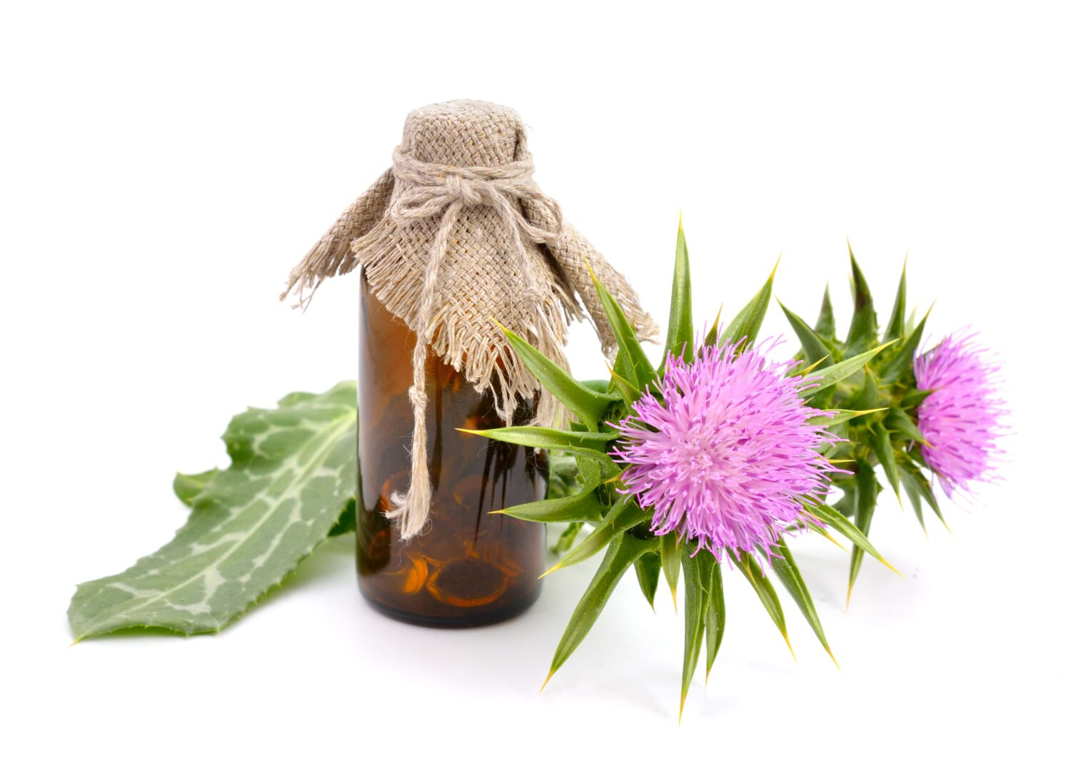 Milk Thistle For Dogs Simply For Dogs
