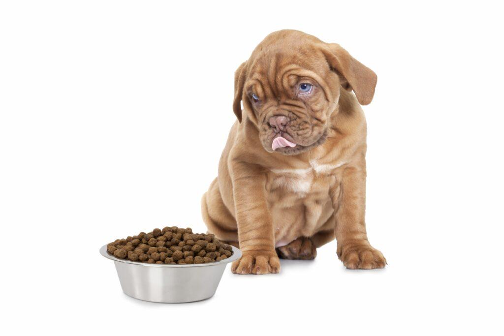 Best Dog Food For A French Mastiff